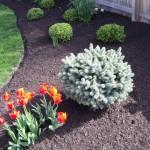 Zionsville Spring Cleanup